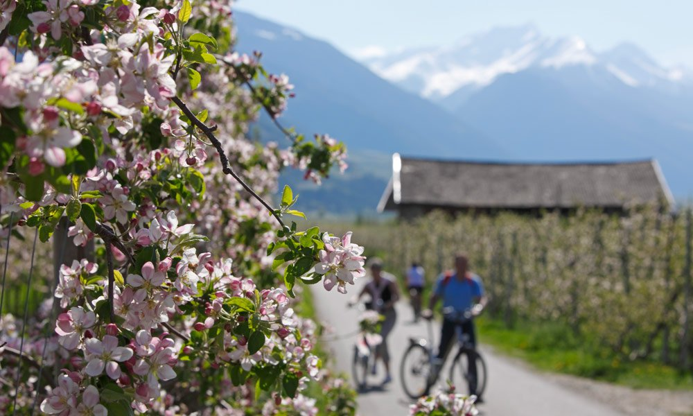 Spring in Val Venosta: a paradise for mountain bikers