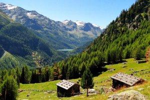Wieshof in Silandro / Val Venosta 17