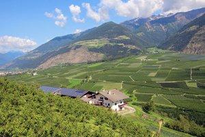 Wieshof in Silandro / Val Venosta 10