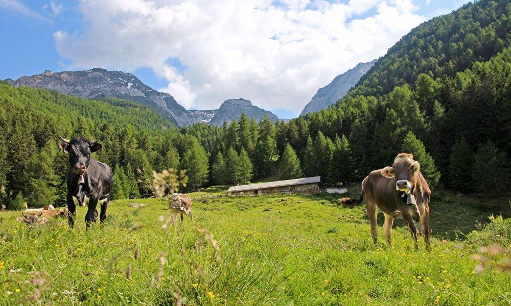 Il rifugio kleinalm vacanze in una regione di alta for Rifugio in baita di montagna