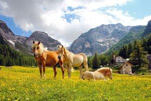 """Il rifugio """"Kleinalm"""" – Vacanze in una regione di alta montagna 5"""