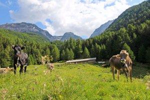 """Il rifugio """"Kleinalm"""" – Vacanze in una regione di alta montagna 2"""